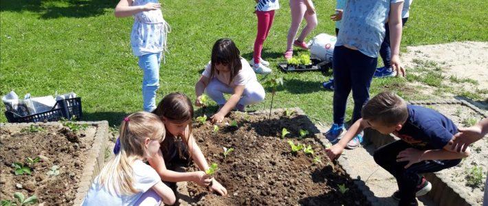 Unesco vrtički – V sodelovanju z naravo sam pridelam hrano